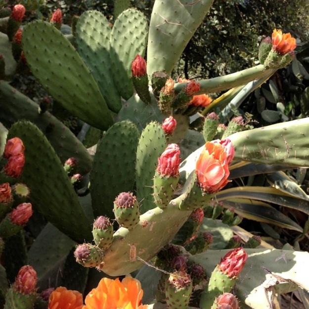 piante grasse in fiore a Parc Güell